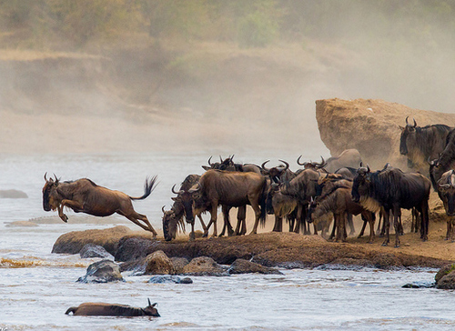 kenya-great-migration